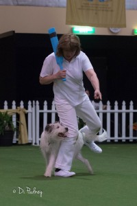 Dances With Dogs Royal Adelaide Show 2015